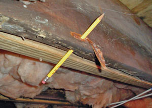 Destroyed crawl space structural wood in Miramichi