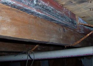 Rotting, decaying wood from mold damage in Oromocto
